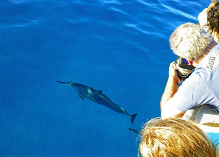 MauiMagic Dolphins 006