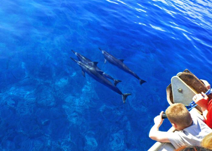 MauiMagic Dolphins 014