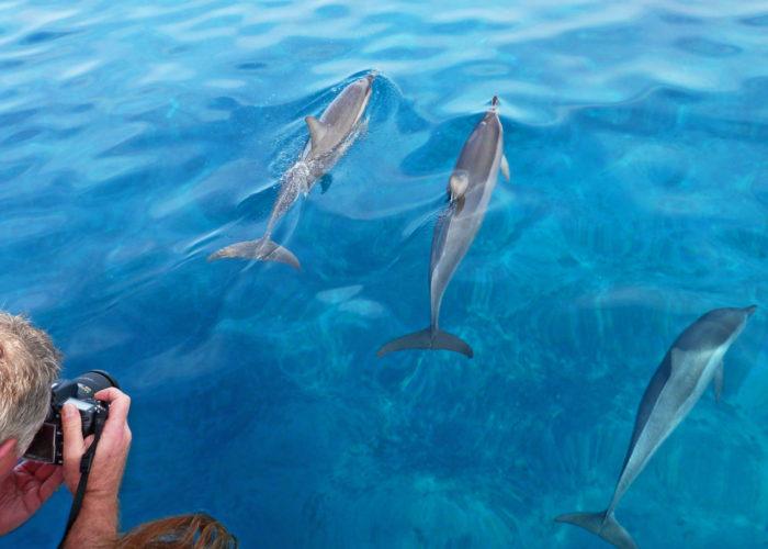 MauiMagic_Dolphins_016
