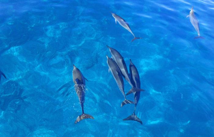 MauiMagic Dolphins 018