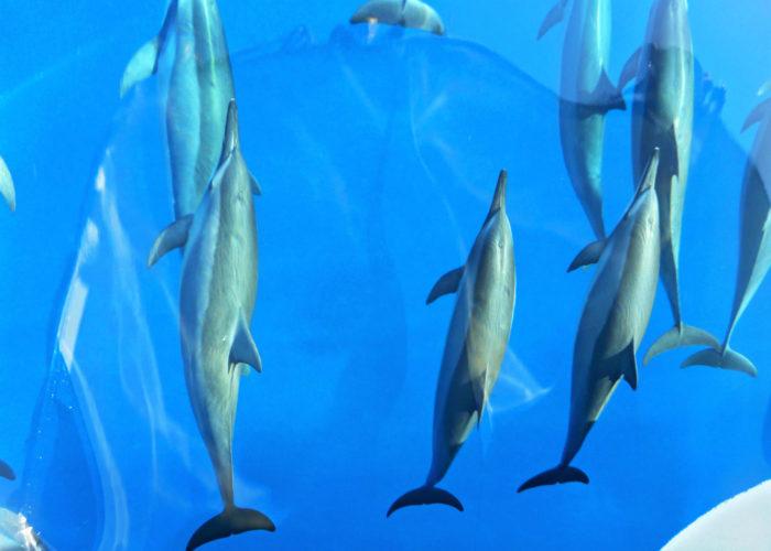 MauiMagic Dolphins 021