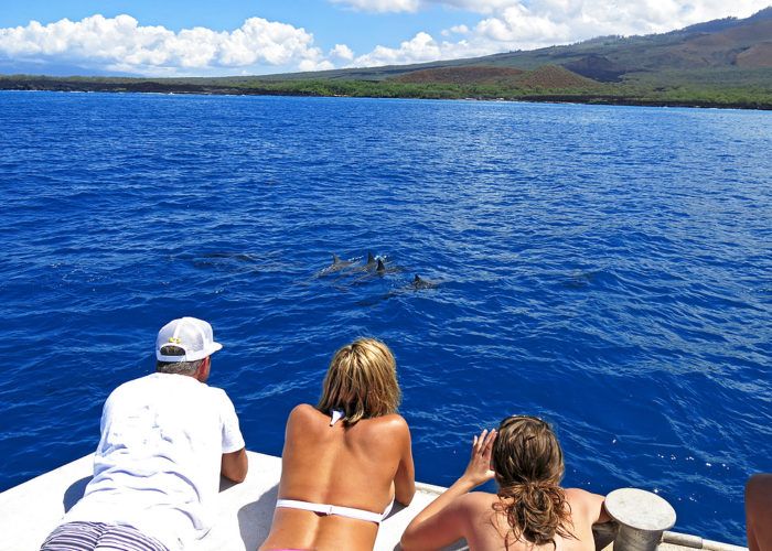 MauiMagic Dolphins 139