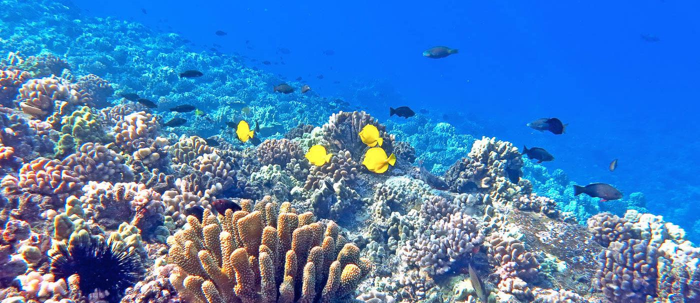 Maui Snorkeling Tours Yelp