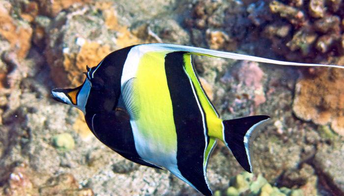 MauiMagic Misc Underwater 043