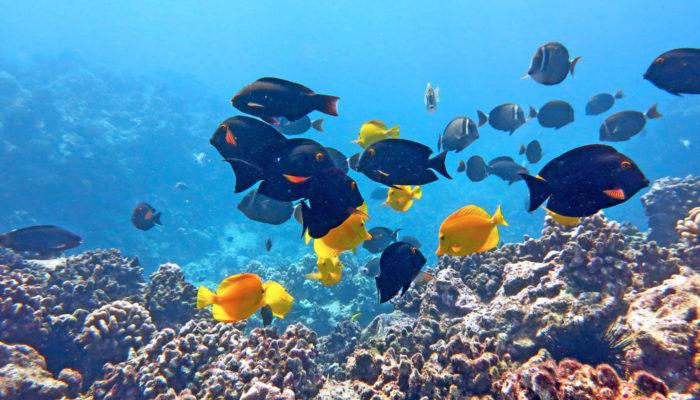 MauiMagic Misc Underwater 047