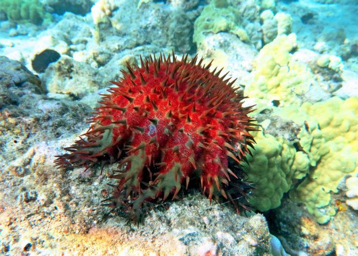 MauiMagic Misc Underwater 048