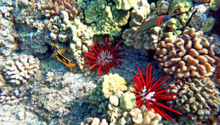 MauiMagic Misc Underwater 056