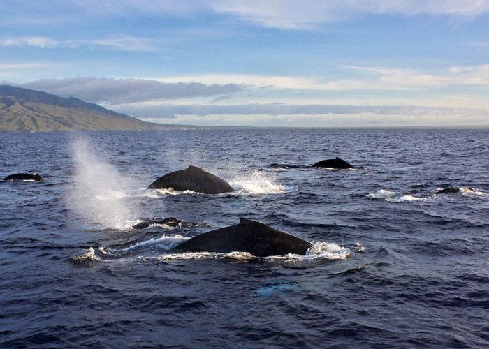 Whales Pod
